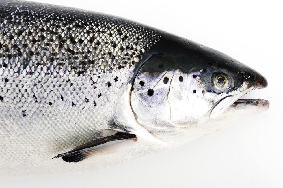 fisk.no