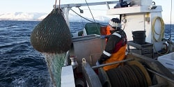 Rekefiske. Illustrasjonsfoto: Johan Wildhagen / Norwegian Seafood Council