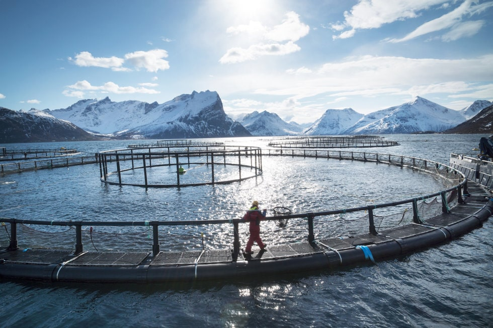 Foto: Johan Wildhagen / Norwegian Seafood Council