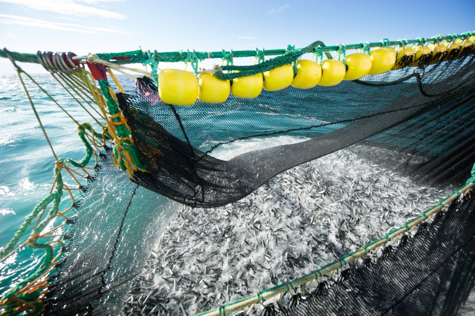Illustrasjonsfoto: Johan Wildhagen / Norwegian Seafood Council