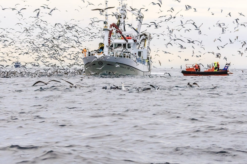 Illustrasjonsfoto: Grethe Hillersøy / Norwegian Seafood Council