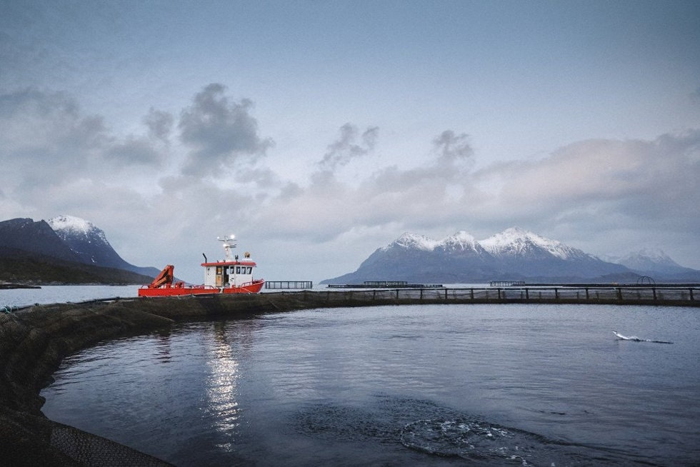 Foto: Cermaq Norway AS